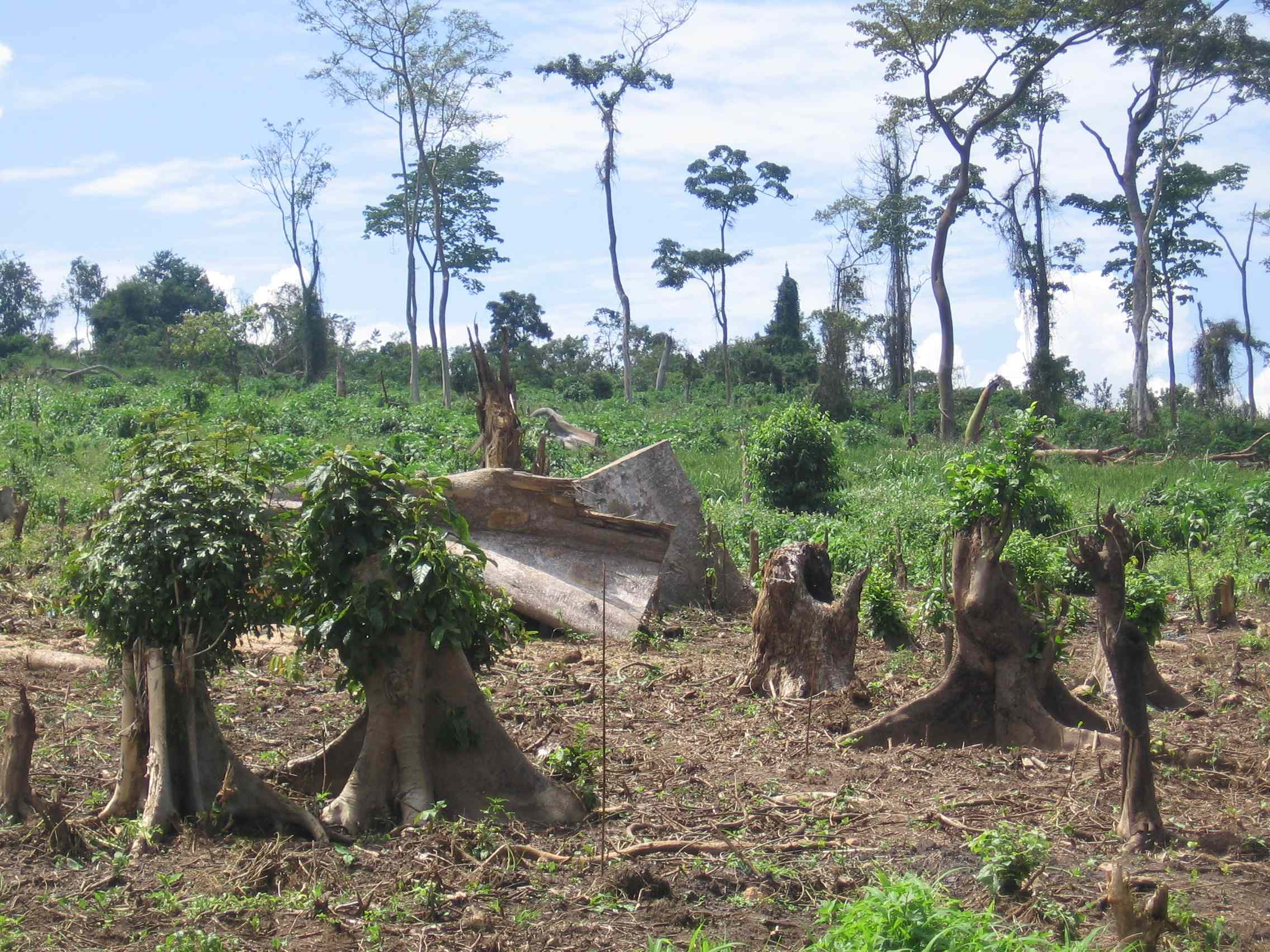 biodiversity and afforestation Commercial afforestation rather than deforestation is a cause of major environmental degradation and social problems in many parts of the world effects of large-scale monoculture tree plantations, especially on grassland biodiversity, can be disastrous.